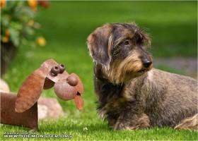 Un chien discute avec un faux chien !