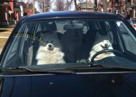 Les chiens partent en vacances