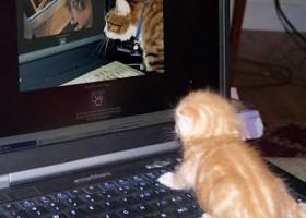Un chat qui regarde un chat
