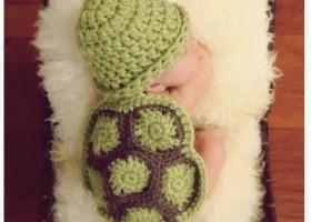 Un bebe tortue