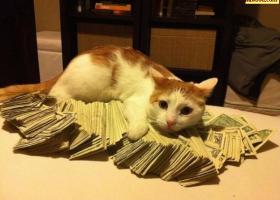 Les chats aussi aiment les billets !