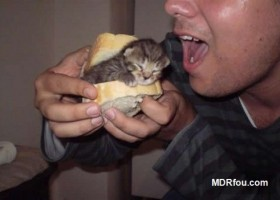 Un petit sandwich de chaton