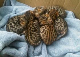 Combien y-a-il de chats
