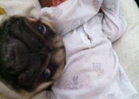 Gros fail du chien sur la photo du bébé
