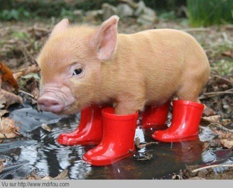 Il faut mettre les bottes quand il pleut