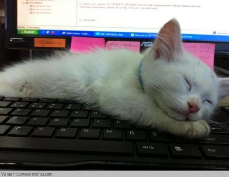 Je décide que tu ne travailleras pas ce matin