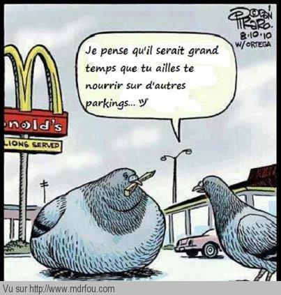 McDo est mauvais pour la santé des pigeons