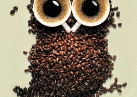 Sympa le hibou en mode café