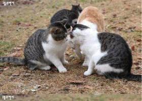 Un chat un peu jaloux