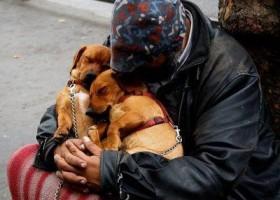 Un homme avec ses deux chiens tout mignons