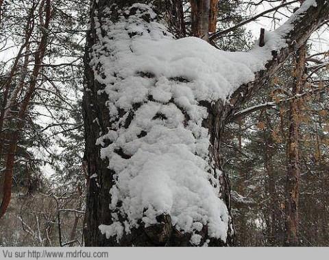 Vous voyez cette homme sur cet arbre