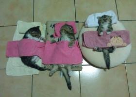 Bonne nuit les petits châtons