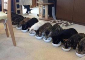 Concours pour chat
