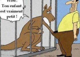 Le kangourou qui dit que son enfant est petit