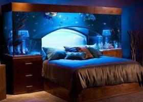 Sympa cet aquarium pour dormir