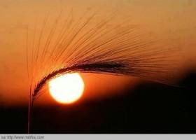 Sympa cet oeil avec le soleil et un épis de blé