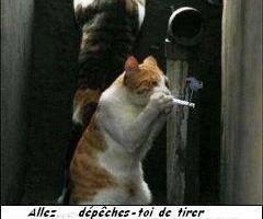 Trop fort le chat qui fume