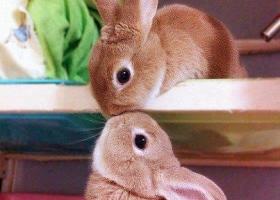 Un gros bisou de petit lapin