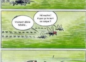 Un moustique avec un casque
