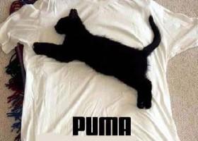Un vrai T-shirt Puma