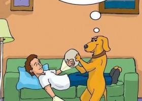 Une blague de chien