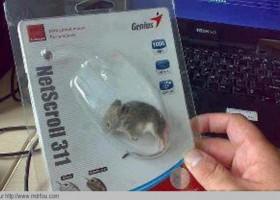 Une vraie souris pour son PC
