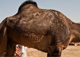 Tatouage de chameau