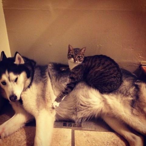 04 - Les chats trouvent les chiens confortables