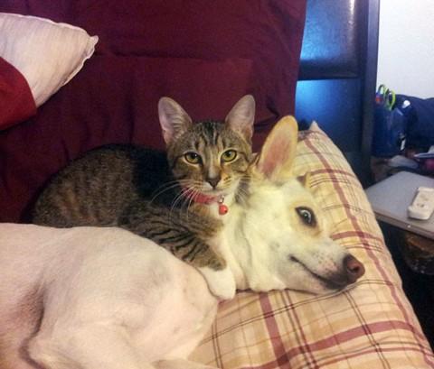 19 - Les chats trouvent les chiens confortables