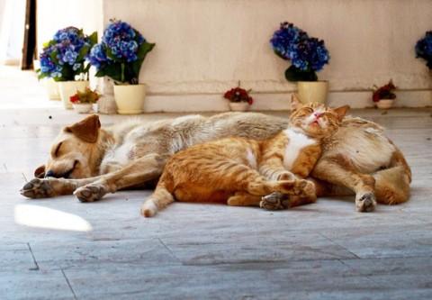 21 - Les chats trouvent les chiens confortables