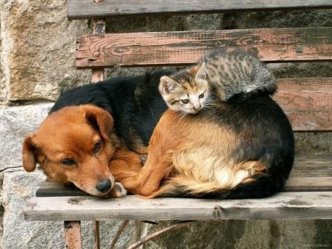 23 - Les chats trouvent les chiens confortables