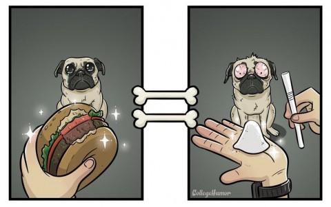 4 - Le monde vu par les chiens