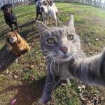le selfie entre potes chiens et chats